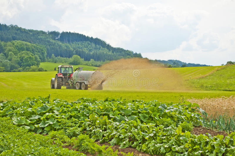 Dung. Agriculture machine with fresh dung royalty free stock image