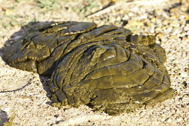 Dung. The dung for make manure stock photo