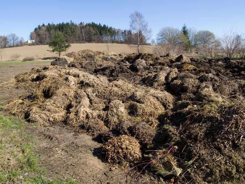 Dung pile. Big heap of organic cattle dung royalty free stock images