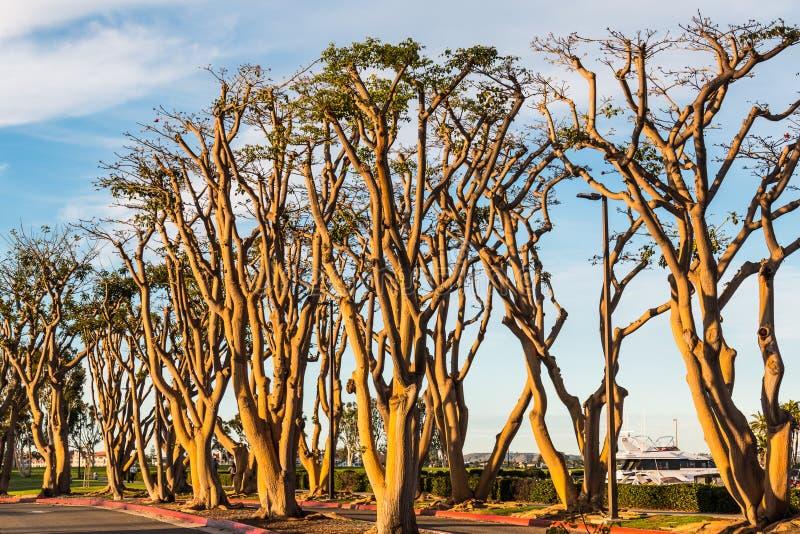 Dunge av Coral Trees royaltyfri fotografi