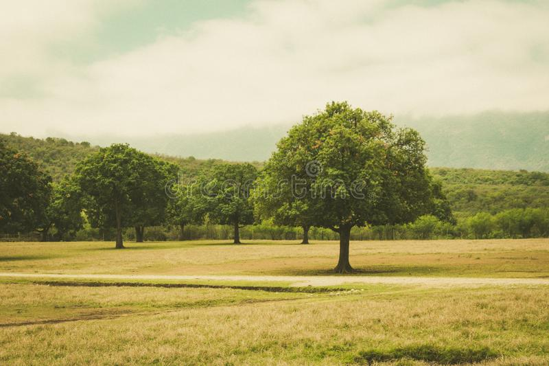 Dunge som ett träd står i ut royaltyfri foto
