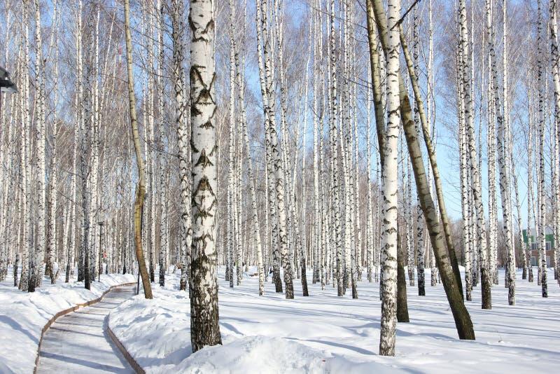 dungen för björklövverkgreen kan fotografering för bildbyråer