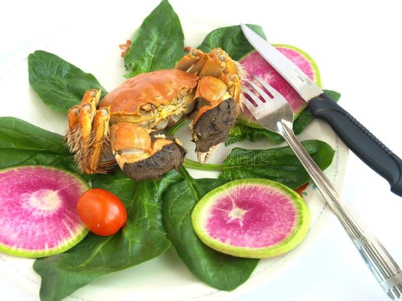 Download Dungeness Befestigungsklammer Stockfoto - Bild von seafood, meer: 27733754