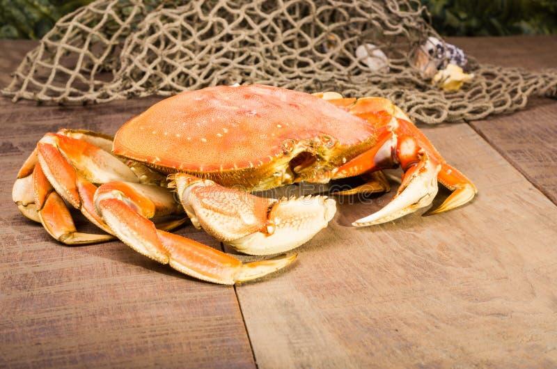 Dungeness krab przygotowywający gotować zdjęcie stock