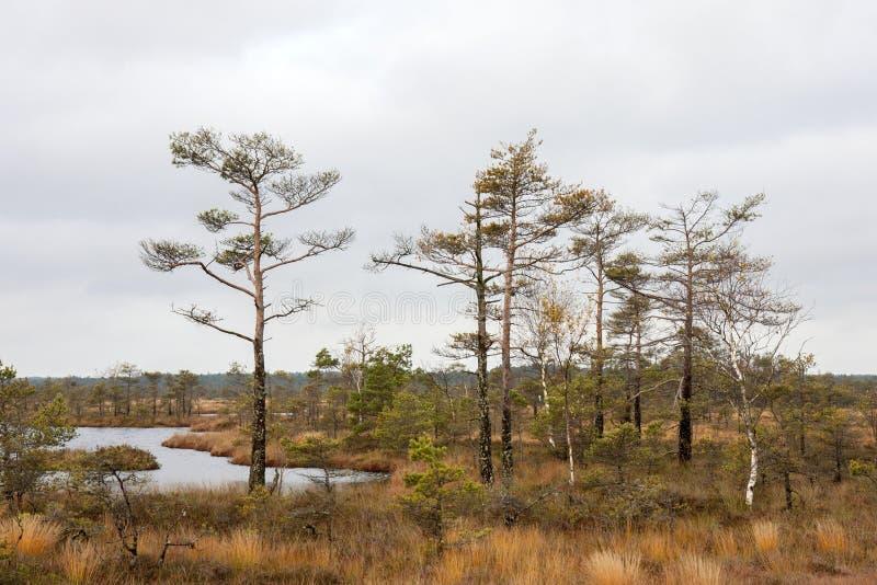 Download Dunika, Latvia Stock Photo - Image: 83710424