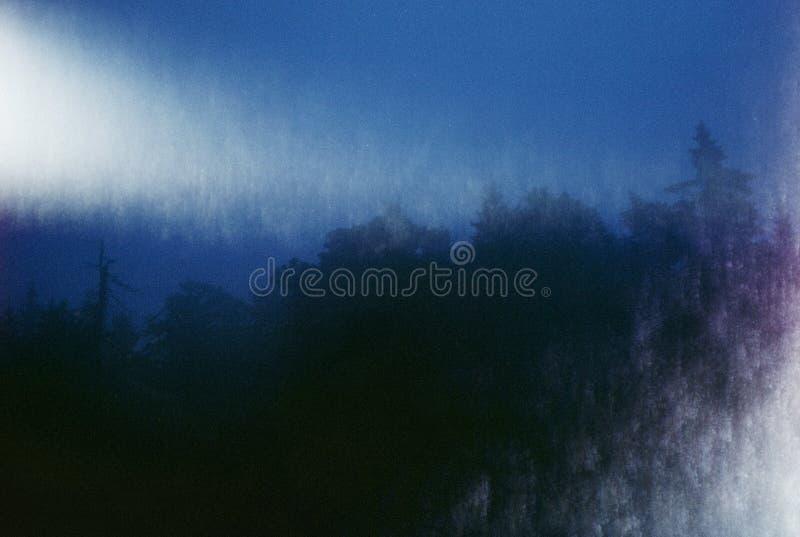 Dunkelblaue Nachtbäume des Waldes tapezieren Tastbeschaffenheitshintergrund lizenzfreie stockfotografie