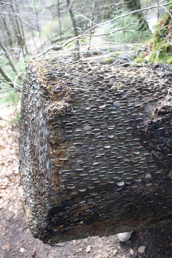 Dunkeld de la vista lateral del árbol del dinero imagen de archivo