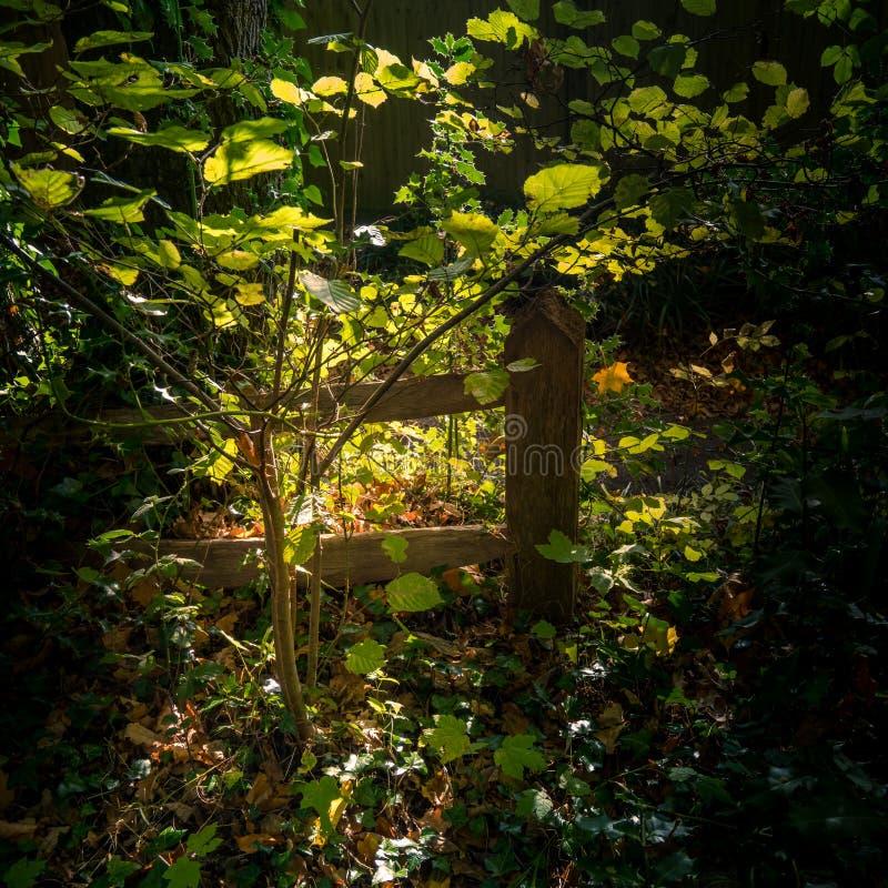 Dunkelheit aber sonnenbeschiene Lichtung in Lindfield West-Sussex lizenzfreie stockfotos