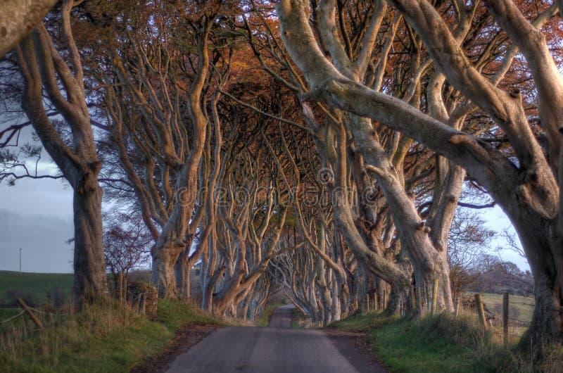 Dunkelheit hegt Bäume ein lizenzfreie stockfotografie