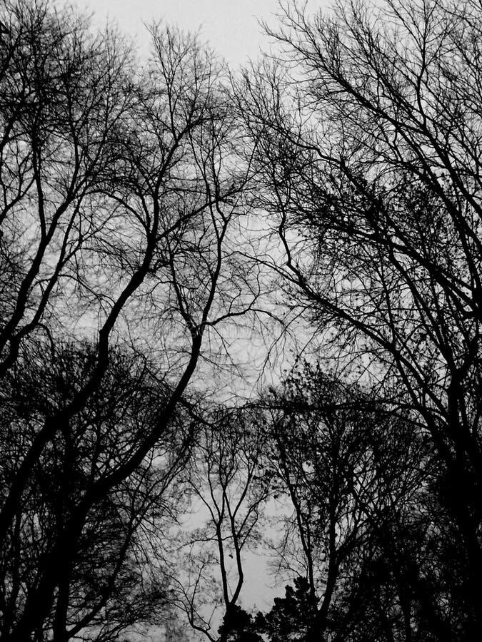 Dunkelste Bäume stockbilder