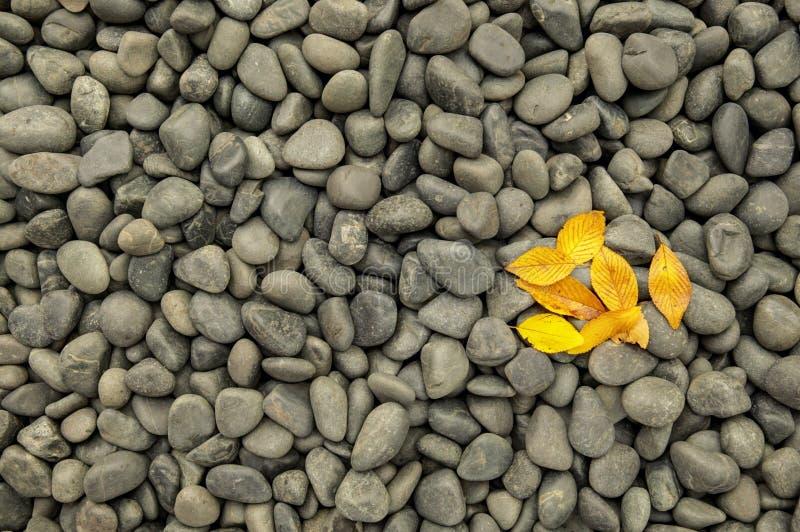 Dunkle Felsen und Kiesel mit gelbem Fall verlässt stockfotos