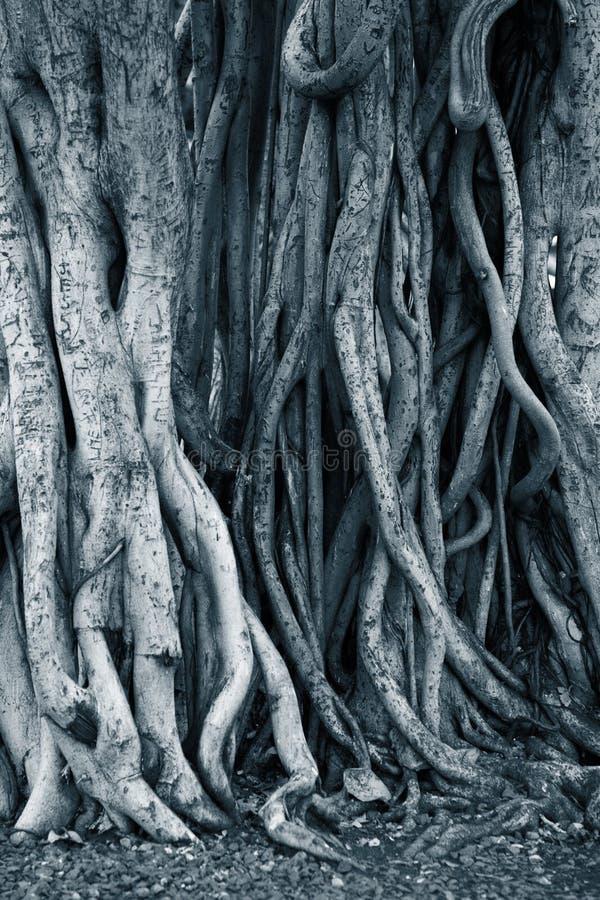 Dunkle Hintergrundbaumwurzeln stockbild