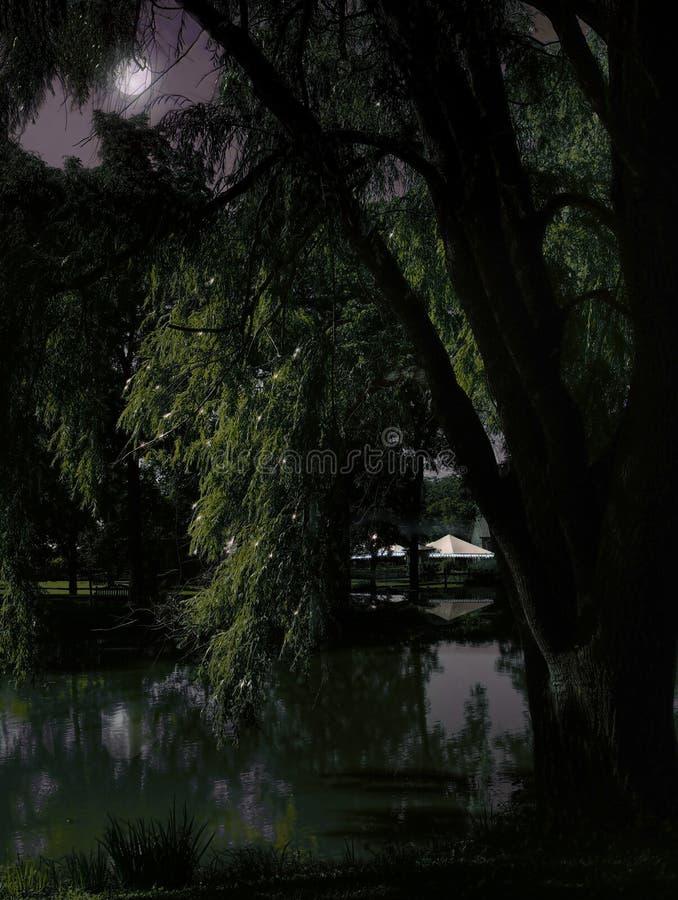 Dunkle Nachtlandschaft lizenzfreies stockfoto
