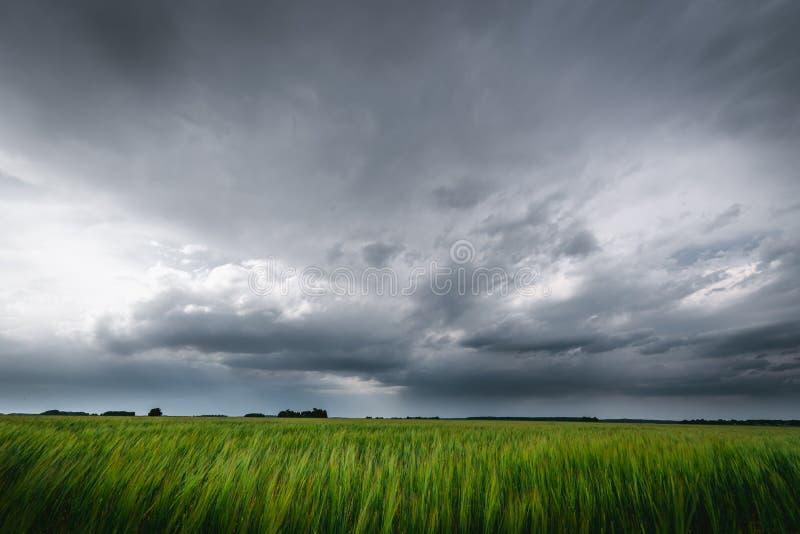 Dunkle regnerische Wolken über den Gerstenfeldern stockfotos