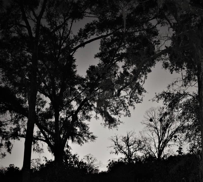 Dunkle romantische Nacht im Wald stockbild