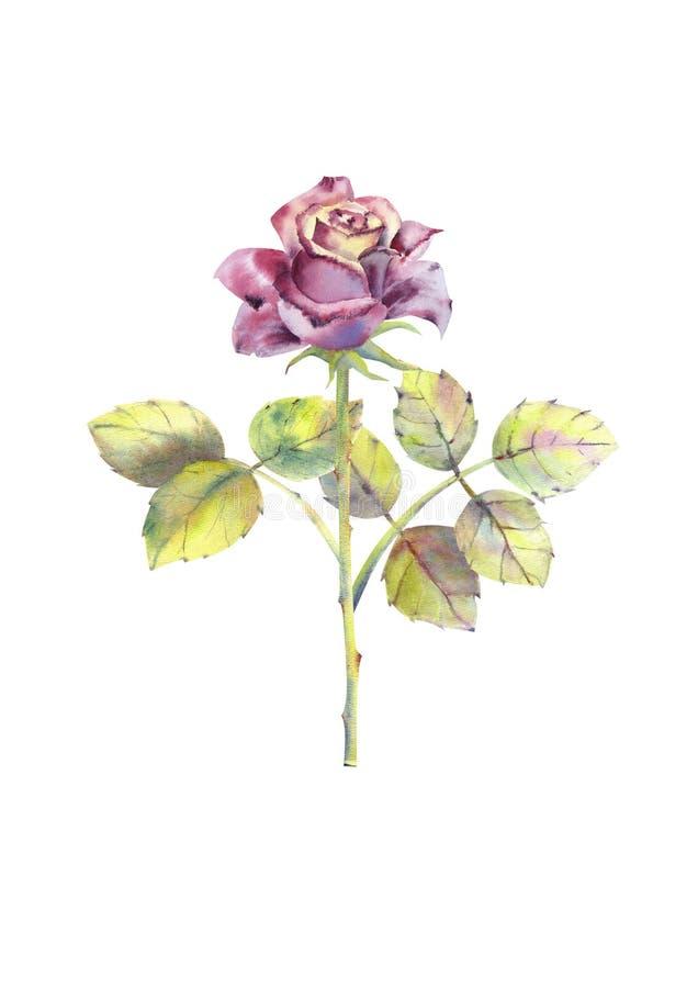 Dunkle Rose, offene Knospe, Stamm, Blätter Dekoratives Bild einer Flugwesenschwalbe ein Blatt Papier in seinem Schnabel Clipart l vektor abbildung