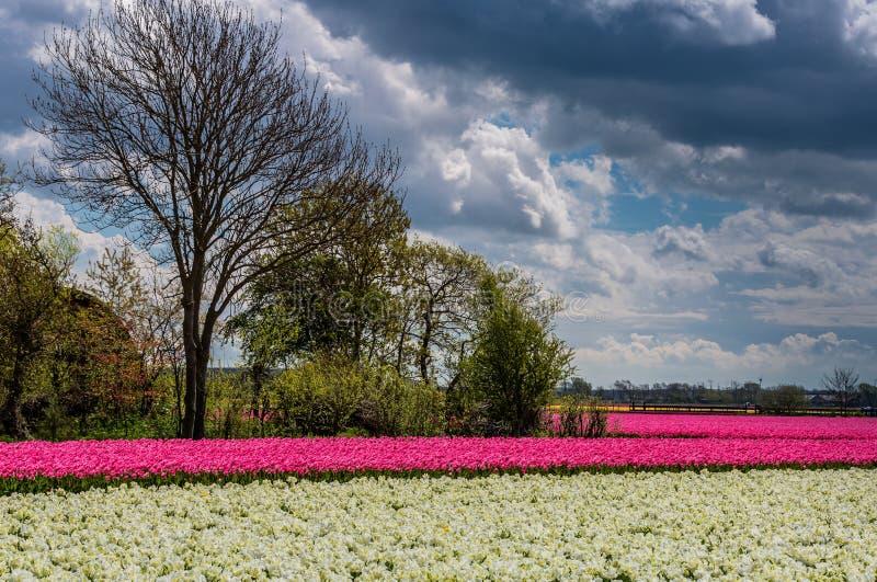 Dunkle Wolken und helle Blumen stockbilder