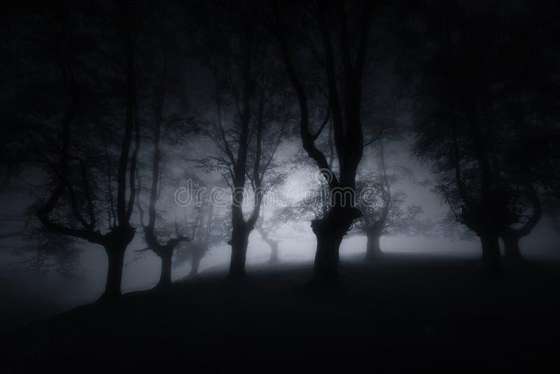 Dunkler furchtsamer Wald mit mysteriösen Bäumen stockbilder