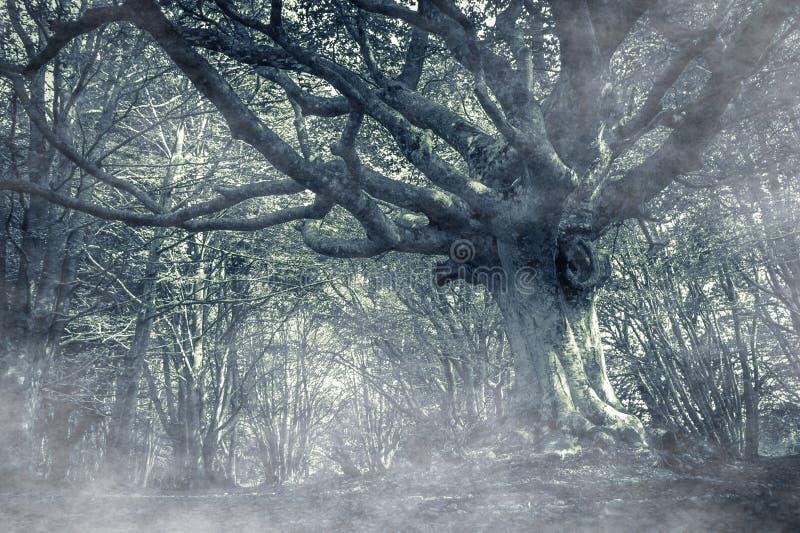 Dunkler Herbstwald mit Nebel lizenzfreies stockbild