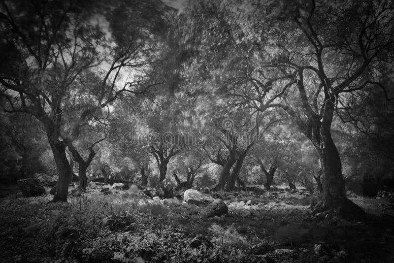 Dunkler olivgrüner gruseliger gespenstischer furchtsamer Wald lizenzfreie stockbilder