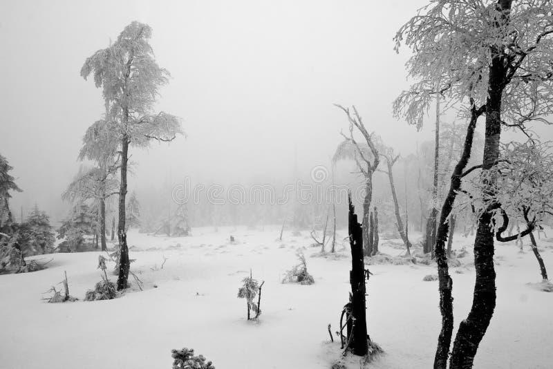 Dunkler Wald in der Winter-Landschaft (Schwarzes u. Weiß) stockfotografie