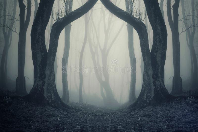Dunkler Wald mit Nebel und symmertical enorme merkwürdige Bäume auf Halloween lizenzfreies stockfoto