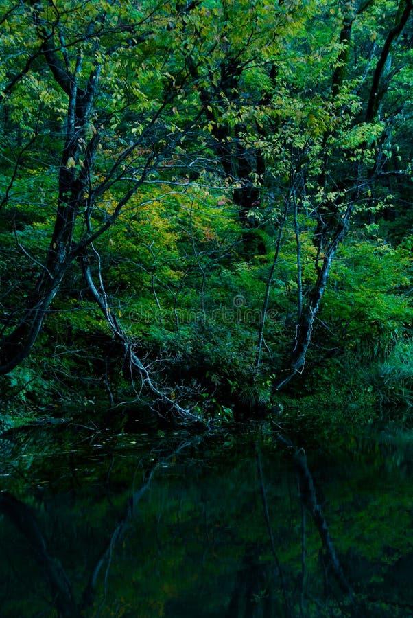 Dunkler Wald und See stockfotos