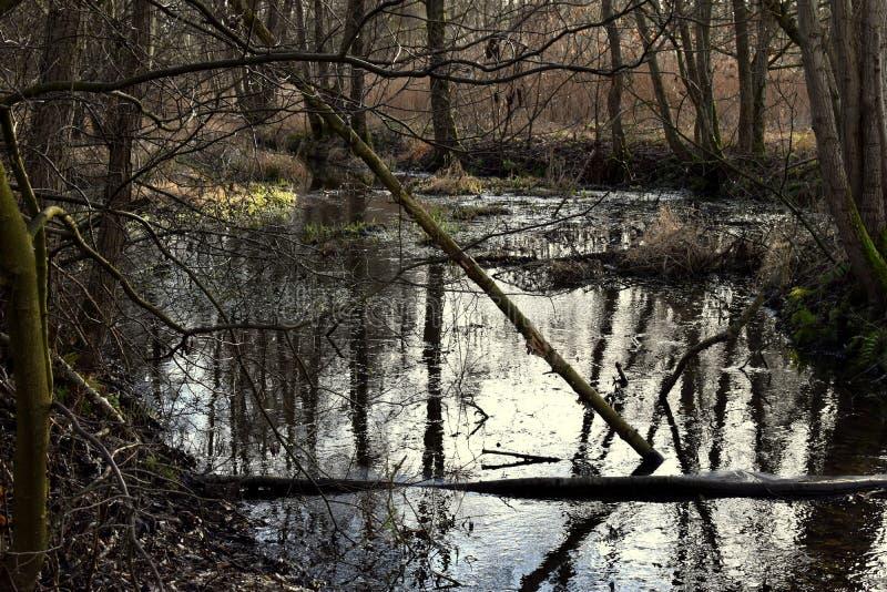Dunkler Waldsumpf Dunkler magischer Wald, Regenwald, nebeliger Wald stockfotografie