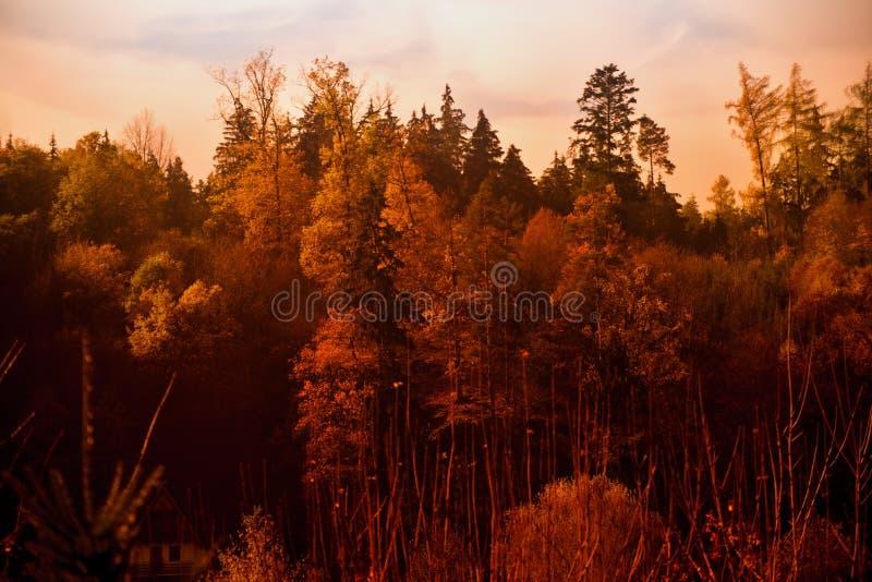 Dunkles Geheimnisholz des Herbstes mit Häuschen lizenzfreies stockbild