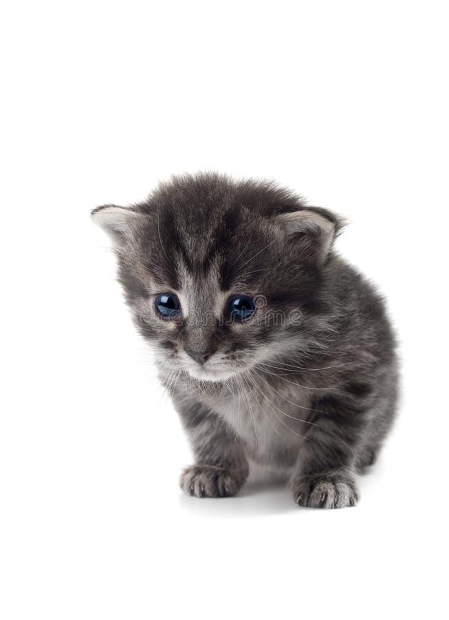 Dunkles Kätzchen getrennt lizenzfreies stockbild