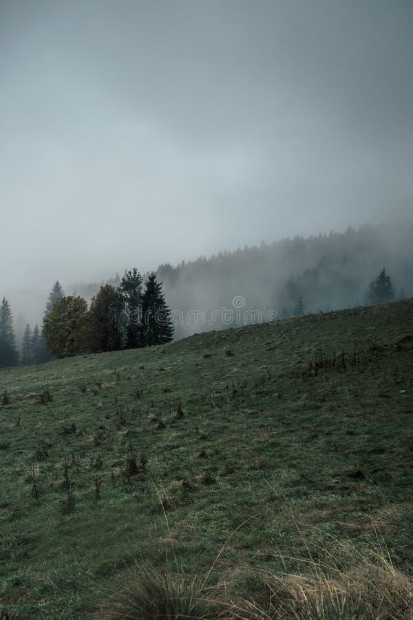 Dunkles, nebeliges Gebirgstal in der traurigen, mysteriösen Stimmung stockfotografie