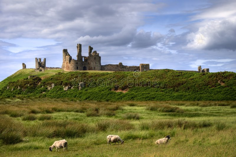 Dunstanburgh Castle and grazing sheep royalty free stock image