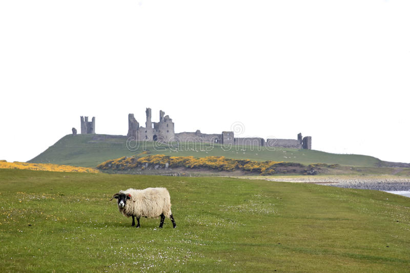 dunstanburgh northumberland свободного полета замока стоковые фото