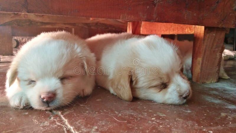 Duo di sonno sotto la tavola fotografie stock libere da diritti
