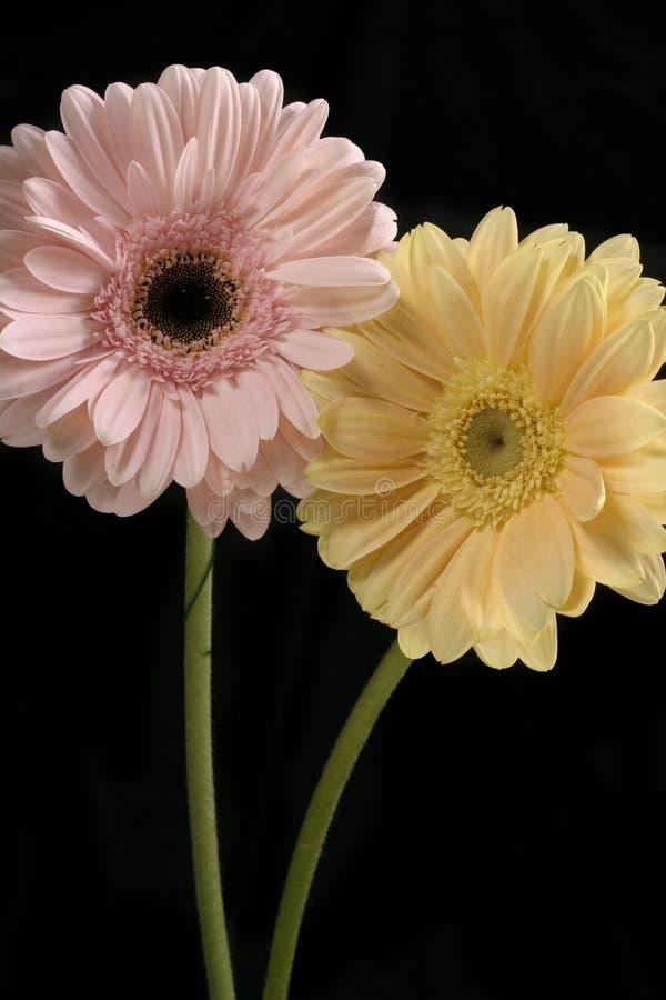 Download Duo pastello - verticale immagine stock. Immagine di yellow - 209687