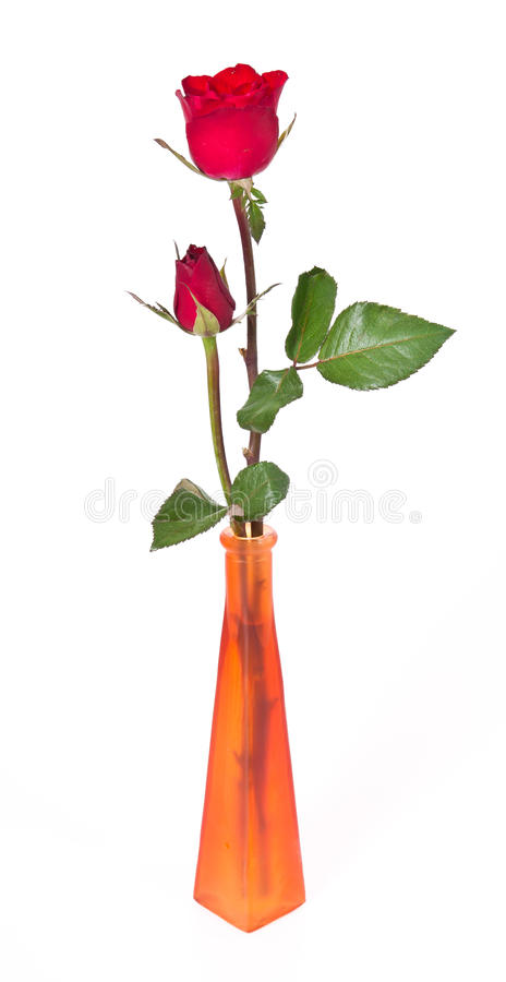 Download Duo Rose in the Vase stock image. Image of buddhism, floral - 23185237