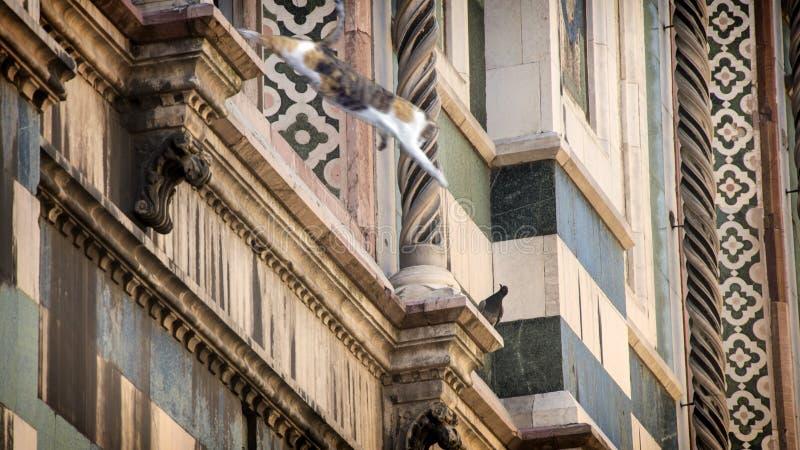 Duomo Florence; katedra Santa Maria del Fiore we Florencji, Włochy Kot skaczący z okna zdjęcia royalty free