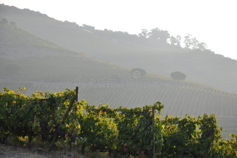 duoro doliny winnica fotografia stock