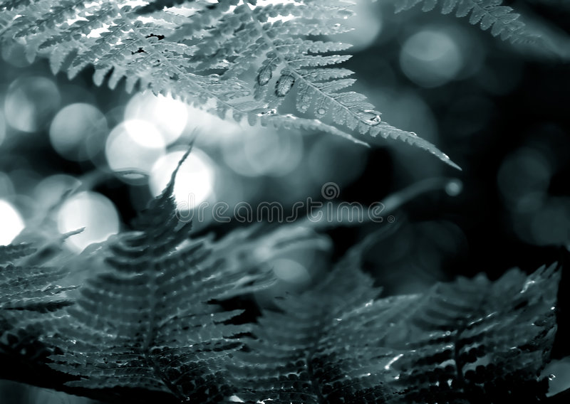 Download Duotone fern frond frame stock image. Image of ecology - 611249