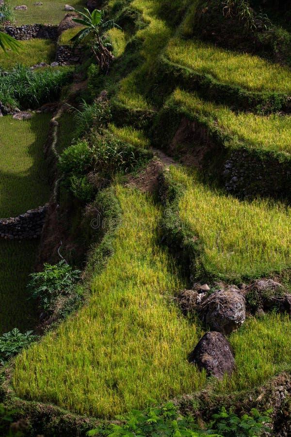 Duplak村庄kudus印度尼西亚 库存图片