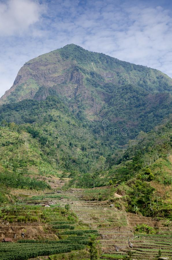 Duplak村庄kudus印度尼西亚 免版税库存照片