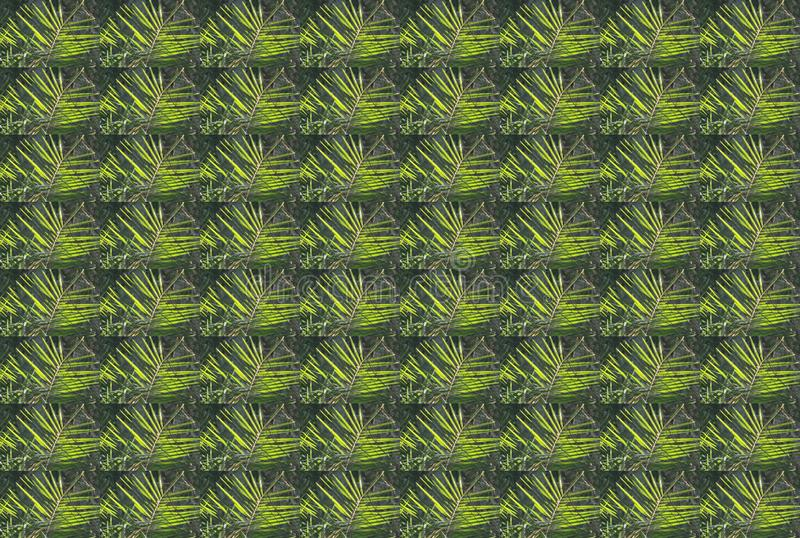 PALM LEAF REPEAT WALLPAPER. Duplication of a green tropical fanning palm leaf presenting as a wallpaper stock image
