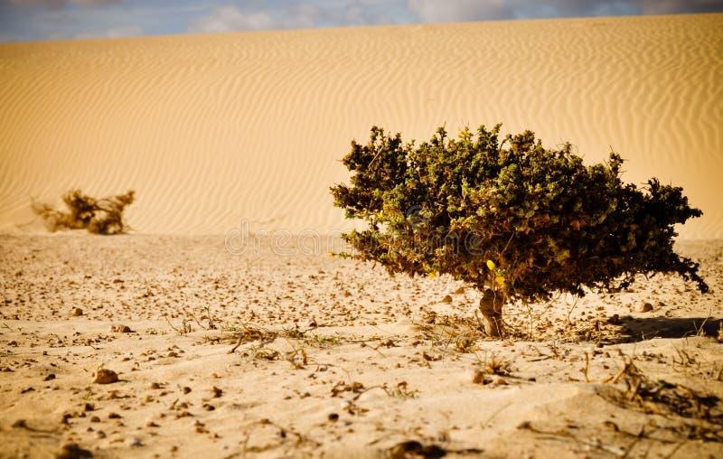 Durée contre le désert. Petite centrale sur la mer des sables. photo libre de droits