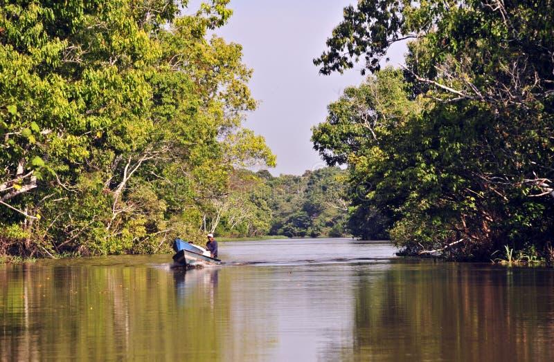 Durée dans la jungle d'Amazone image stock