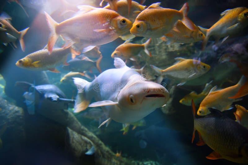 Durée de mer Différents types des poissons et de tortue photographie stock libre de droits