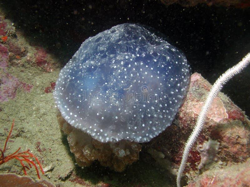 Durée de mer tropicale photo libre de droits