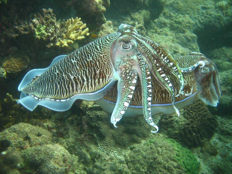 Durée de mer tropicale photos libres de droits