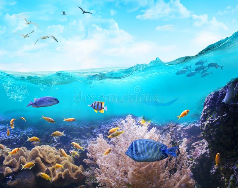 Durée marine dans les eaux tropicales image libre de droits