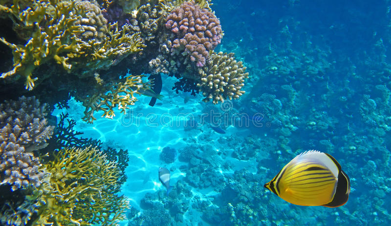 Durée sous-marine image stock
