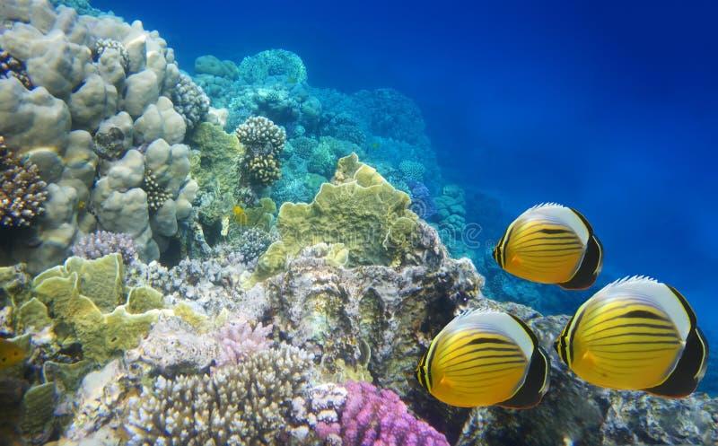 Durée sous-marine d'un récif de dur-corail photographie stock libre de droits